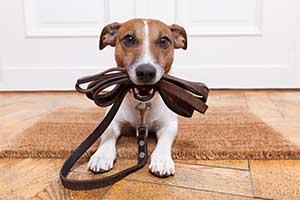 Halsband & Leinen für kleine Hunde