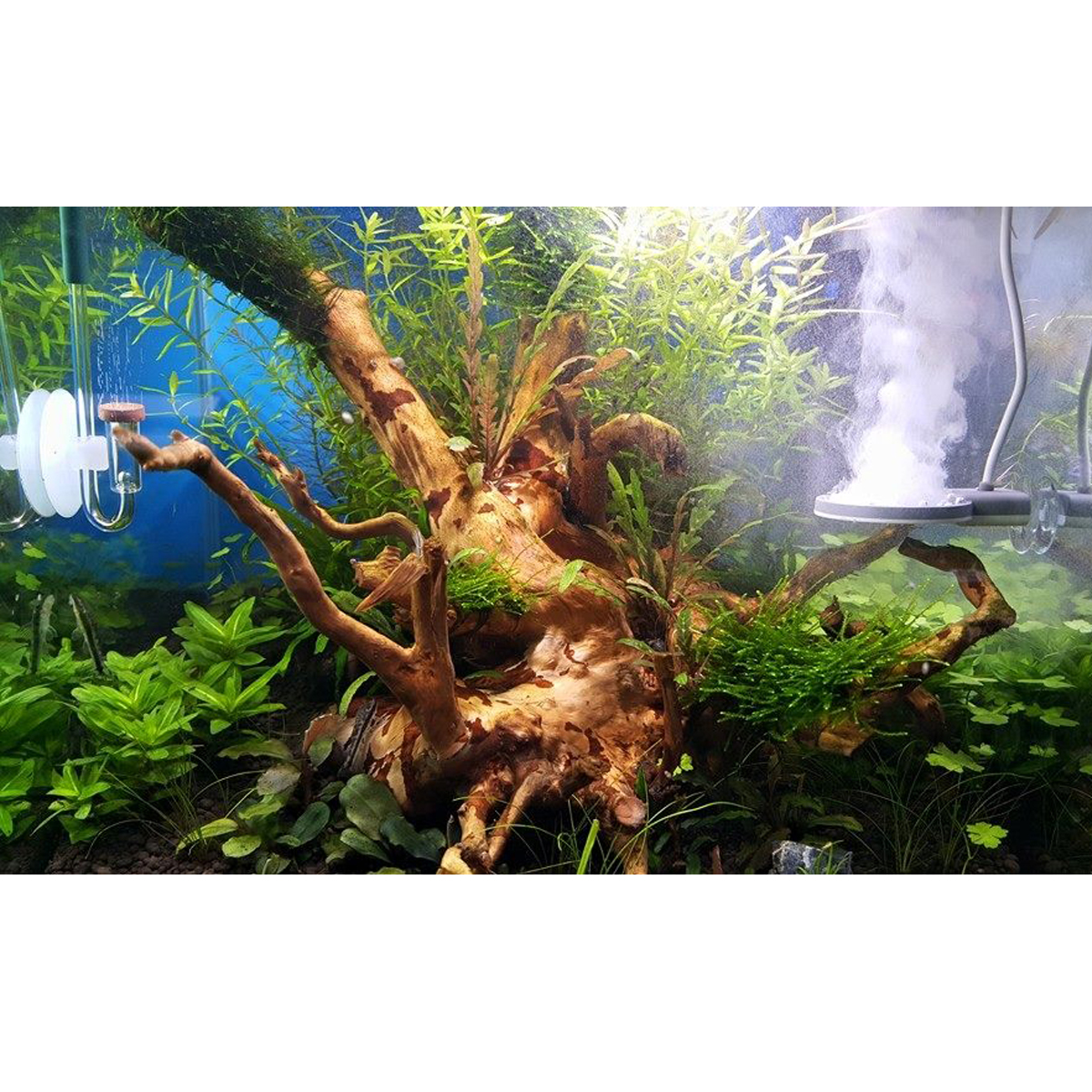 twinstar 2 aquarium sterilisator m5 g nstig kaufen bei zooroyal. Black Bedroom Furniture Sets. Home Design Ideas