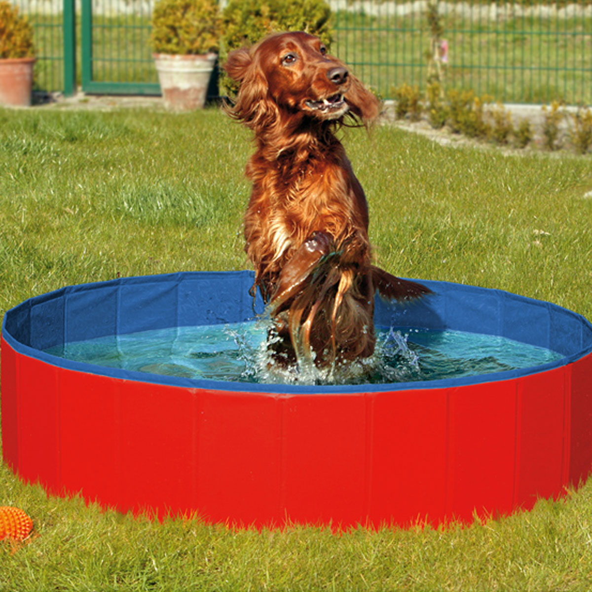 doggy pool hundeschwimmbecken g nstig kaufen bei zooroyal. Black Bedroom Furniture Sets. Home Design Ideas
