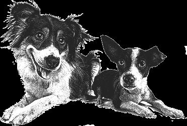 Hector und Paula Dogs