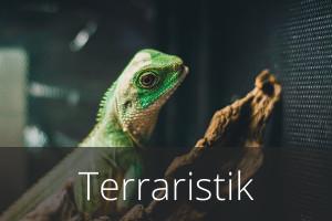 Terraristik-Angebote
