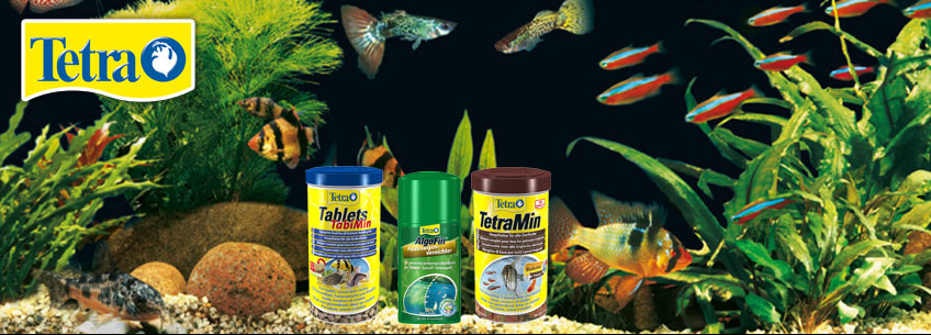 Tetra aquaristik teichbedarf terraristik bei zooroyal for Zierfische hannover