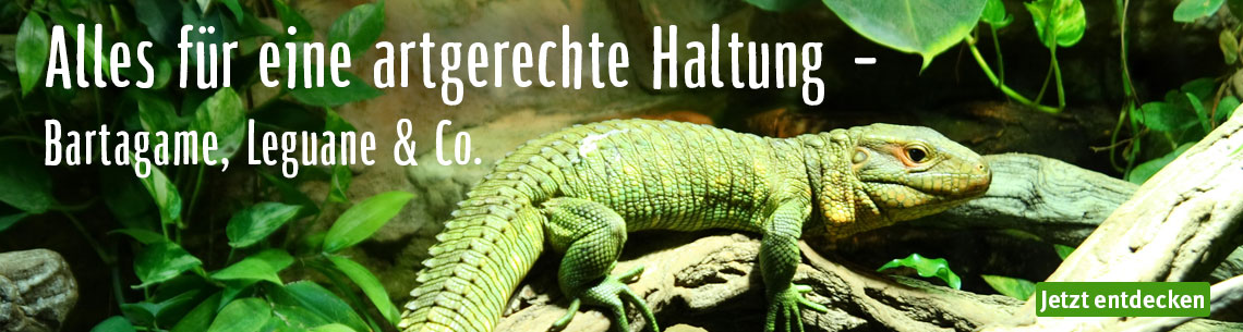 Bartagame Leguane & Co.