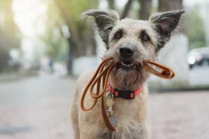Hundeleinen & Hundegeschirre