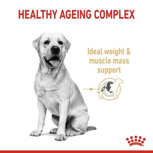 ROYAL CANIN Labrador Retriever Adult 5+ Trockenfutter für Hunde ab 5 Jahren