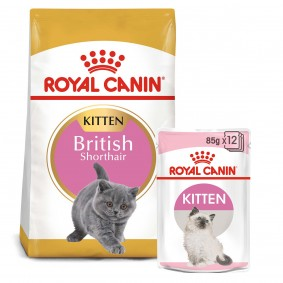 ROYAL CANIN KITTEN British Shorthair 2kg + Kitten in Soße 12x85g