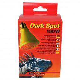 Lucky Reptile Dark Spot