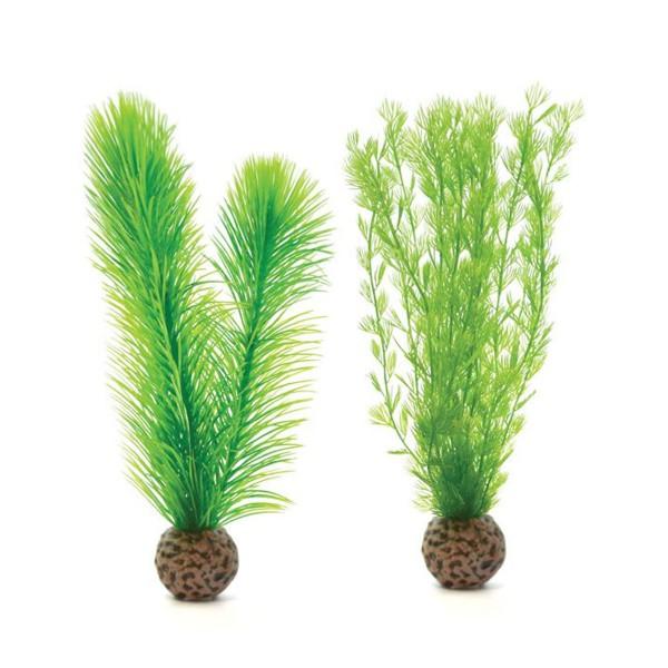 biOrb grüne Federfarnpflanze klein