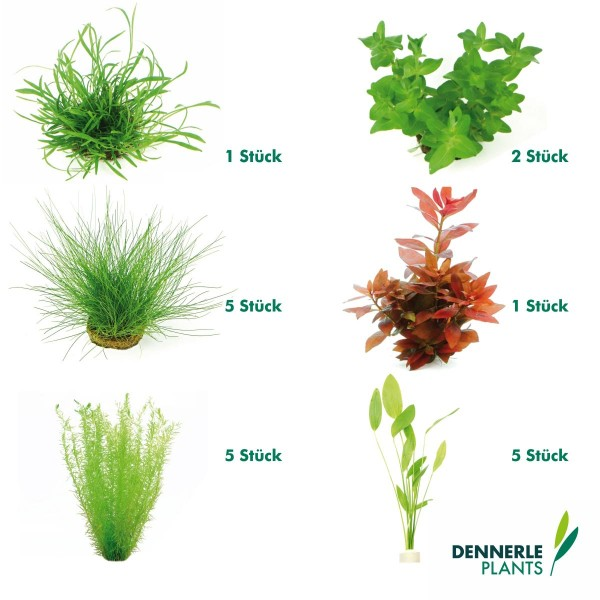 Dennerle Plants Aquarienpflanzen Set für 120l