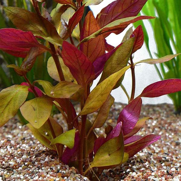 Planet Plants Bundpflanzen Mix