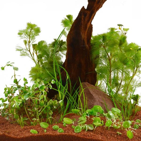Planet Plants Nano Aquarienpflanzen Set - für 2...