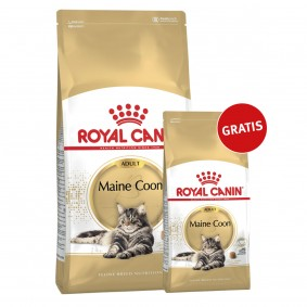Royal Canin Katzenfutter Maine Coon 10kg+2kg gratis