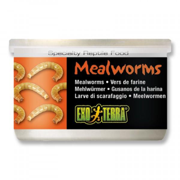 Exo Terra Reptilienfutter Mehlwürmer 34g