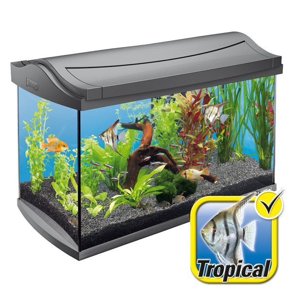 tetra aquaart aquarium komplett set 60 liter anthrazit. Black Bedroom Furniture Sets. Home Design Ideas