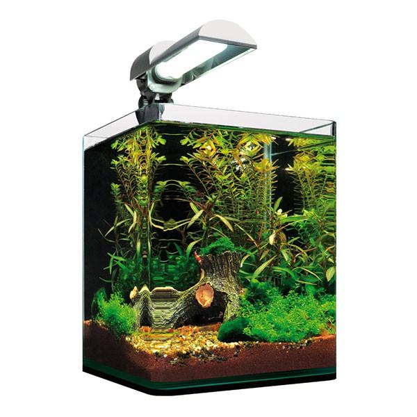 dennerle nanocube 10l aquarium g nstig kaufen bei zooroyal. Black Bedroom Furniture Sets. Home Design Ideas