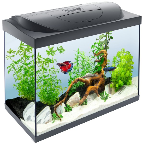 tetra starter line aquarium led 80l g nstig kaufen bei zooroyal. Black Bedroom Furniture Sets. Home Design Ideas