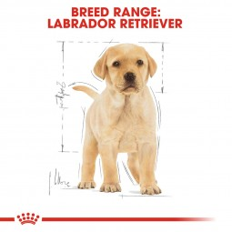 ROYAL CANIN Labrador Retriever Puppy granule pro štěňata