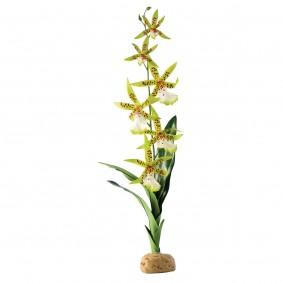 Exo Terra Terrarium Bodenpflanze - Spinnen Orchidee
