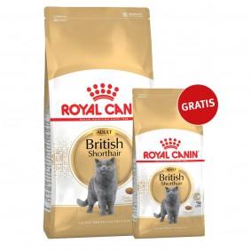 Royal Canin Katzenfutter British Shorthair 10kg+2kg gratis