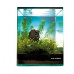 Dennerle Pflanzenlandschaft - Blyxa Cube 10L