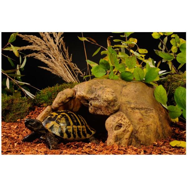 Exo Terra Höhle für Landschildkröten