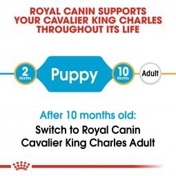 Royal Canin Cavalier King Charles Junior