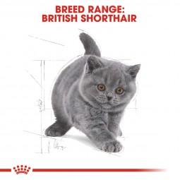 ROYAL CANIN British Shorthair Kittenfutter trocken für Kätzchen