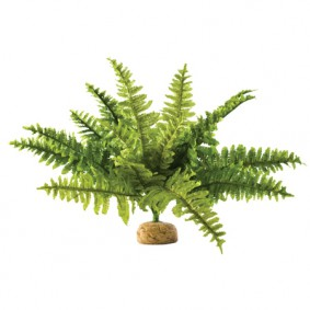 Exo Terra Terrarium Bodenpflanze - Boston Farn Medium