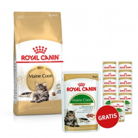 Royal Canin Maine Coon 10kg plus Feline Breed Nutrition Maine Coon 12x85g GRATIS