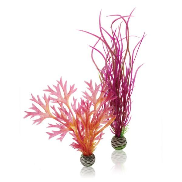 biOrb Aquariumpflanzen-Set Easy Plant rot/pink M 2Stück