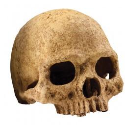 Exo Terra Primate Skull Terrariendekoration