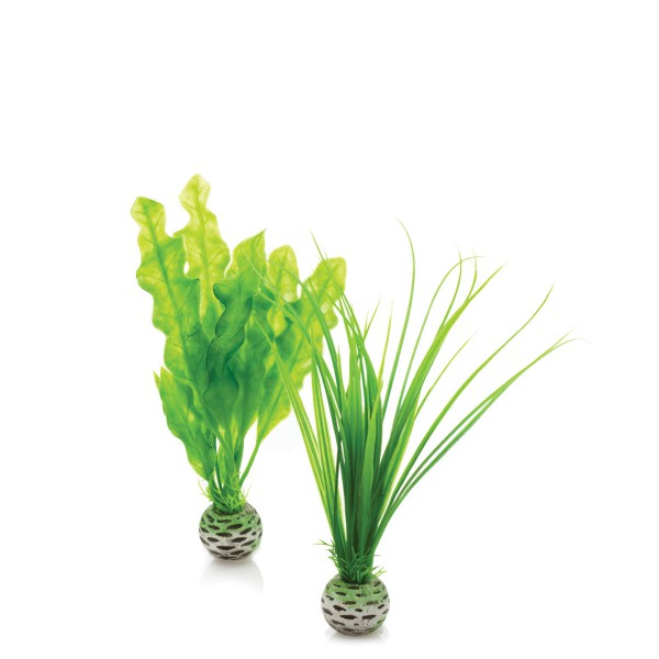 biOrb Aquariumpflanzen-Set Easy Plant grün 2Stü...