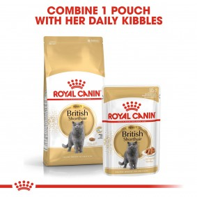 ROYAL CANIN ADULT British Shorthair 2kg + Nassfutter in Soße 12x85g