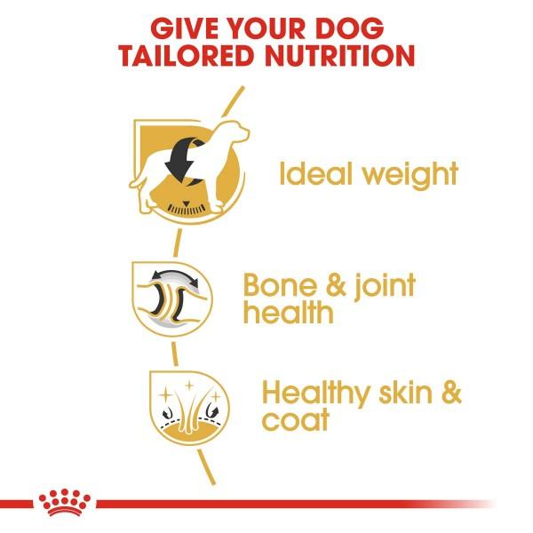 ROYAL CANIN Labrador Retriever Adult 3kg + Labrador Adult in Soße 10x140g