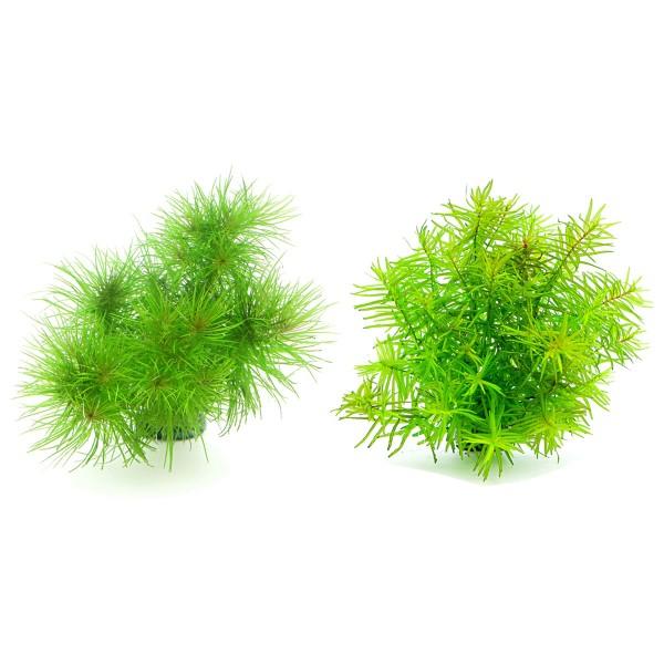Dennerle Aquarienpflanzen Topseller Sparbundle ...